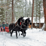 Amherst Curling Club Annual Sleigh Ride